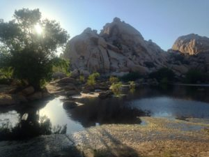 Barker Dam in Joshua Tree is usually dry so this was a lucky day